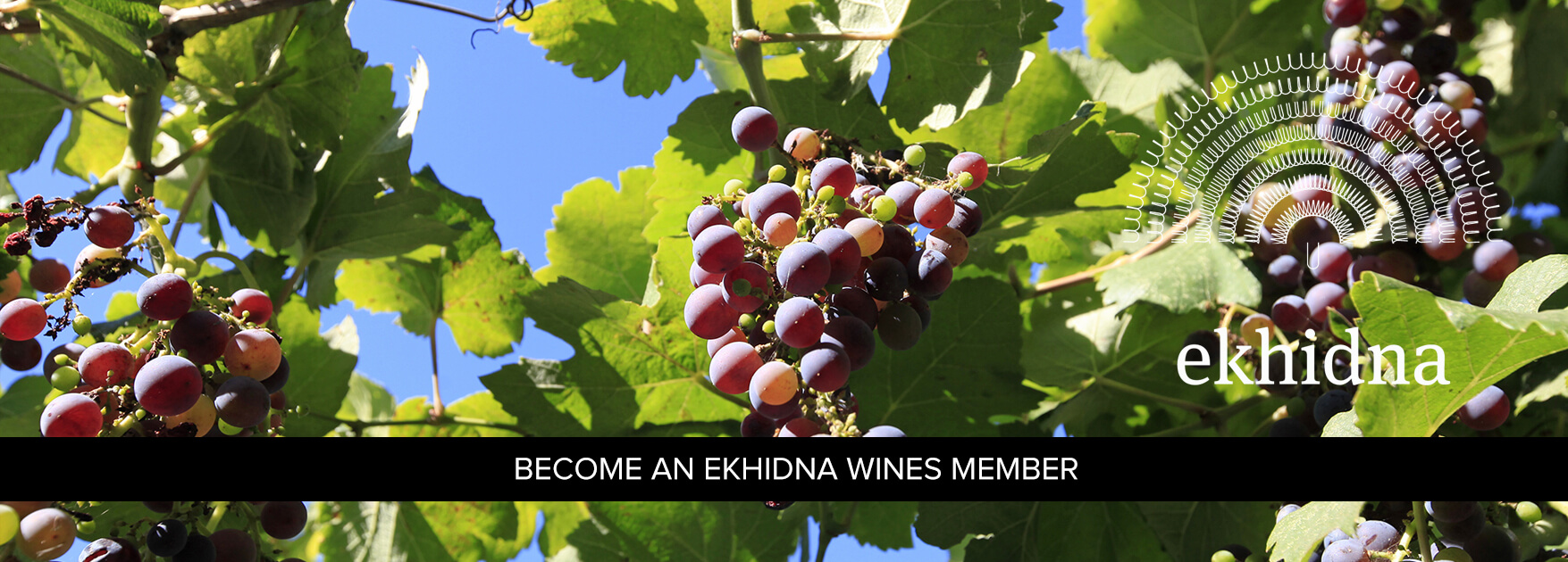 Ekhidna Wines Member